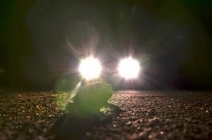kröten bei nacht_David Posor_pixelio.de