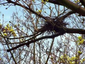 Nest im Baum